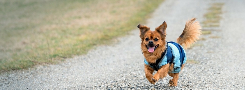 Joint Pain Relief Remedies For Dogs