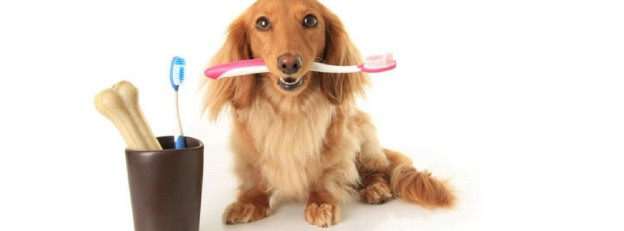 Pet Dental Care Tips