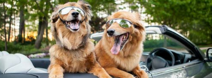 Tips For Travelling With Dogs In The Car
