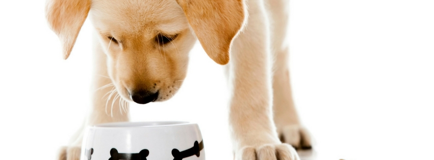 Foods For Treating Anxiety In Dogs