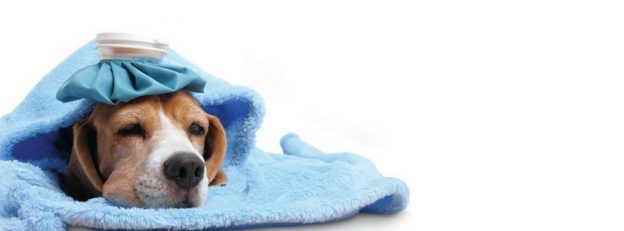 DIY Home Remedies For Dogs