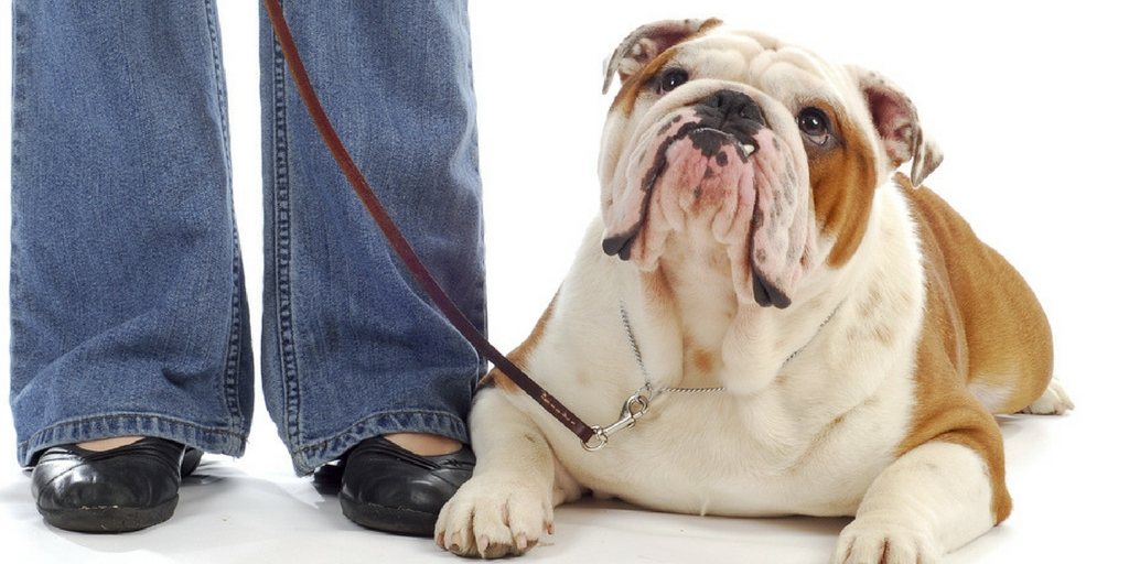 30 Dog Training Tips To Train Your Dog