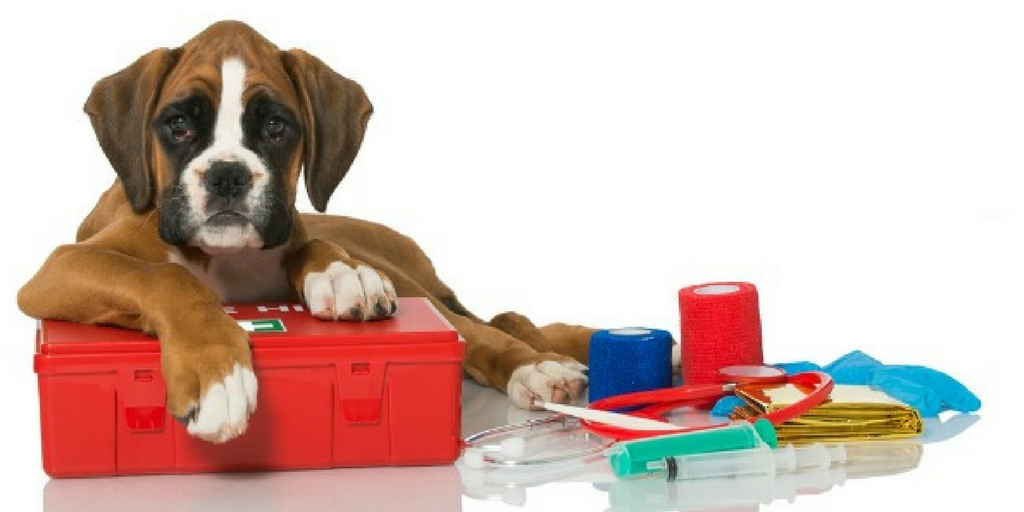 Basic Pet First Aid To Give On Emergency