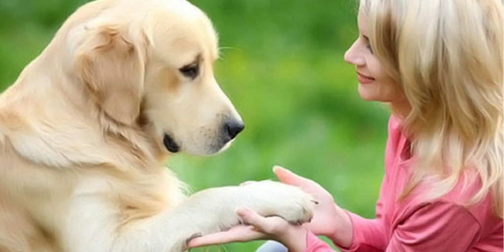 Dog Behavior Explained: 17 Dog Behaviors To Understand Your Dog Better