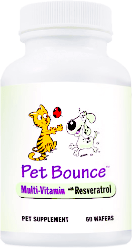 Liquid-Pain-Relief-for-Pets-with-Arthritis