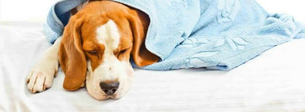 common health problems in dogs