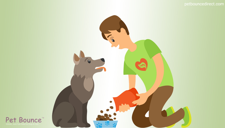 A Guide To Healthy Food For Dogs