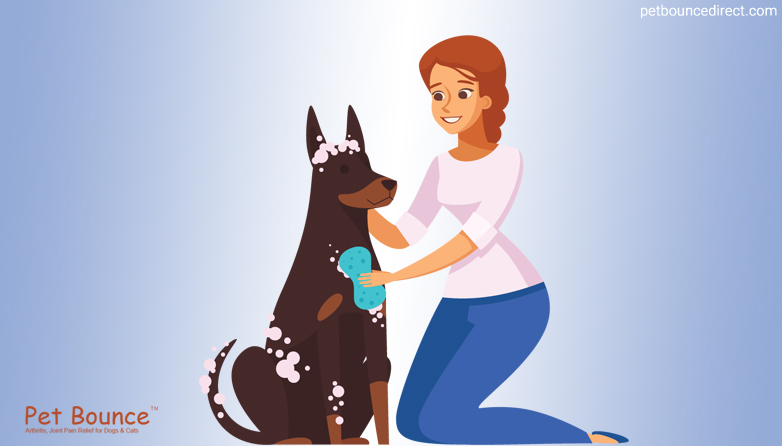 Some Amazing Tips For Grooming Your Dog