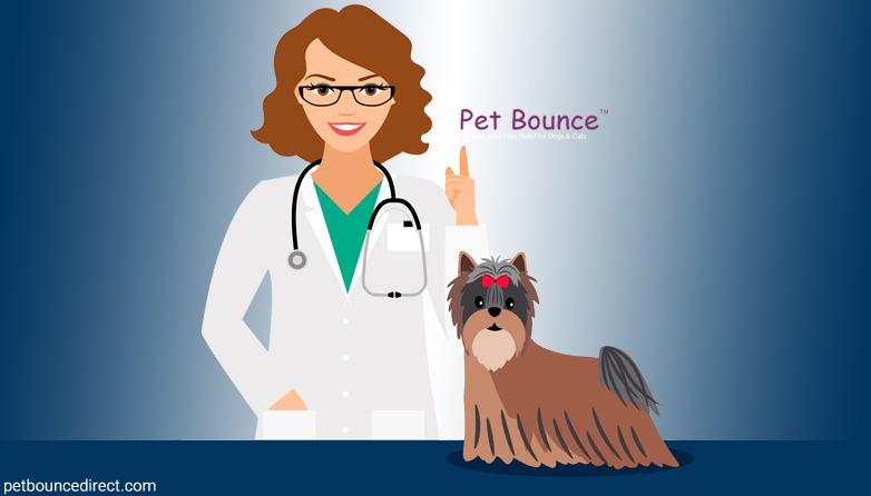 The Complete Guide To Common Dog Diseases