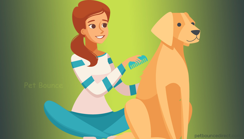 2019 Pet Care Trends: Must Be Followed By Every Pet Parent